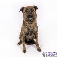 Charlie Needs a Home and a Yard