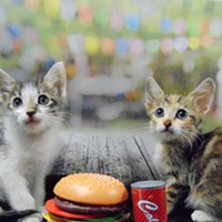 Help Cats by Eating BBQ!
