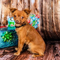 Holiday Specials on Pups at PACC
