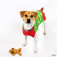 Adoptable Pet: Tipsy Needs a Home