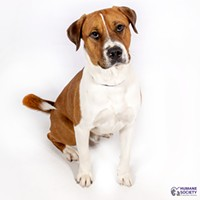 Adoptable Pet: Kelso Needs a Home