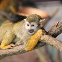 Temple of Tiny Monkeys to Open Saturday