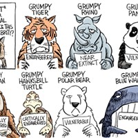 Afternoon Cartoon: Grumpy Cat