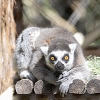 Zooperheroes: Reid Park Zoo