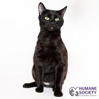 Adoptable Pet: Cupcake Needs a Home