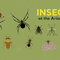 Insect Insanity at the Arizona-Sonora Desert Museum