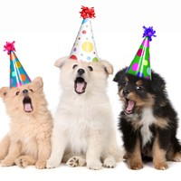 August 1 is the Universal Birthday for Shelter Dogs
