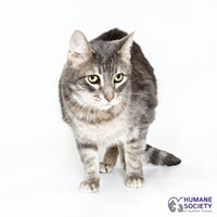 Adoptable Pet: Lazarus