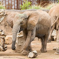 Celebrate Nandi the elephant's birthday this Sunday