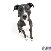 Adoptable Pet: Hyalite Needs a Home