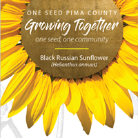 One Seed Pima County: Blooming Black Russian Sunflowers