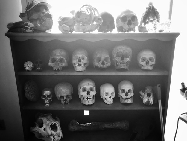 Ron Ratkevich's home collection of ancient skulls. - BRIAN SMITH