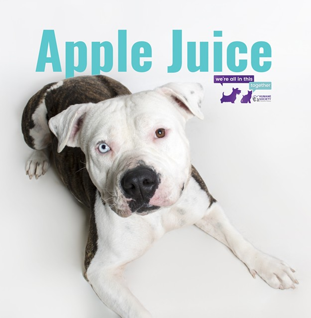 apple_juice_521799_3_.jpg