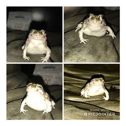 Bonus Pet: Donny