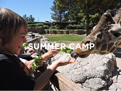 Summer camp at the zoo - COURTESY