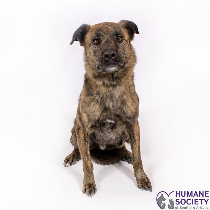 Charlie the Dog - HSSA