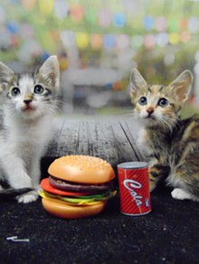 Cat Mixer Grille on Saturday, Sept. 22, 2018 - PIMA ANIMAL CARE CENTER