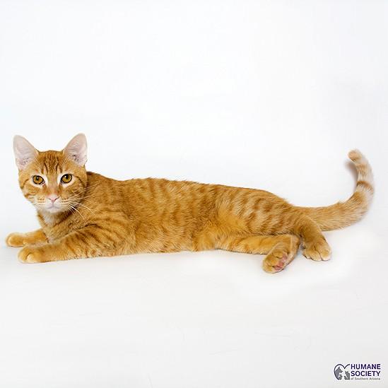 Mac the Cat - HSSA