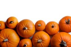 bigstock-many-orange-pumpkins-frame-iso-252559693.jpg