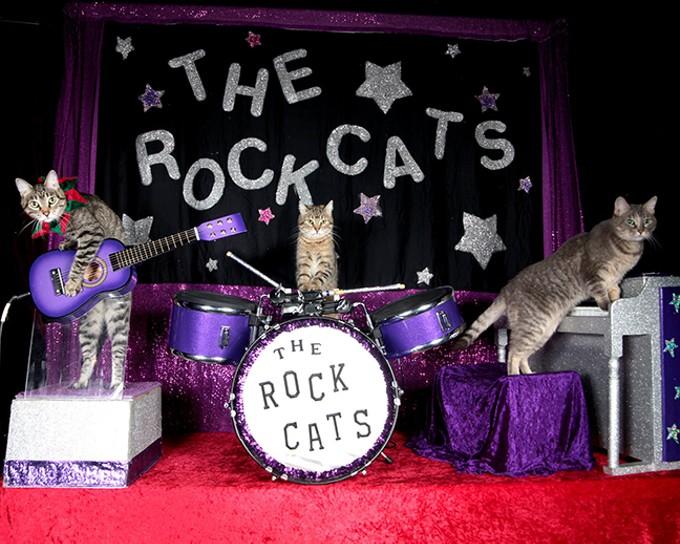 The Rock Cats - COURTESY