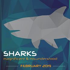 Sharks - COURTESY