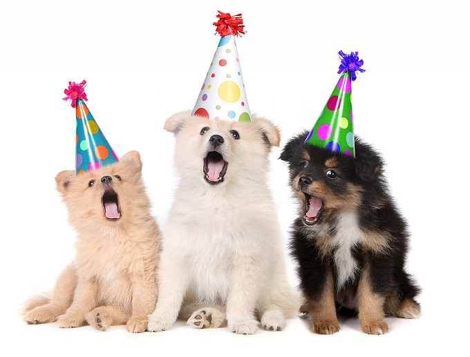 Dogs with birthday hats - BIGSTOCK