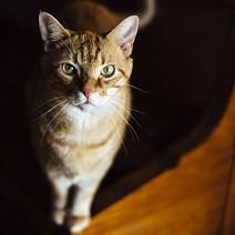 cat_video_fest.jpg
