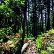 Mt. Lemmon - COURTESY PHOTO