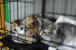 File photo of kittens - BIGSTOCK