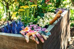 bigstock-freshly-planted-wooden-planter-311832238.jpg