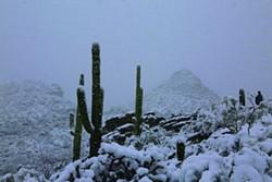 saguaro3_yetman.jpg