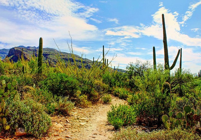 Near Pima Canyon Trail - JEFF GARDNER