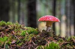 fantastic_fungi.jpg