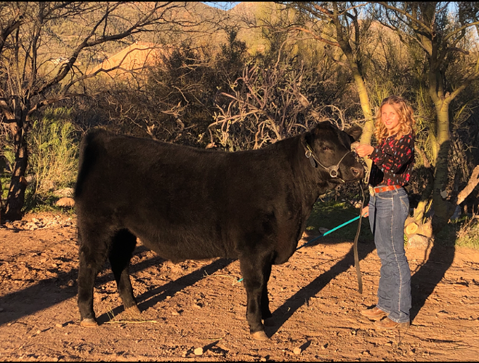 Ella Levin stands with her steer she raised at her family's home as a part of her 4-H training. The 1,200-pound steer will be sold at the upcoming PCJLSI online auction with the majority of the proceeds going to the 14-year-old and her family. - COURTESY PHOTO