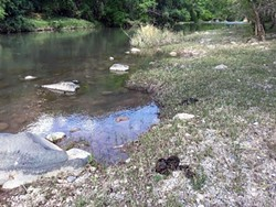 """""""The only way to really solve this problem of cows getting into these closed river areas is to end grazing in the uplands,"""" says Joe Trudeau of the Center for Biological Diversity. (Photo courtesy of Joe Trudeau, Center for Biological Diversity)"""