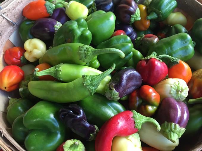 Chiles at the Santa Cruz Farmers' Market. - MARI HERRERAS