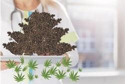 cannabis-marijuana-weed-pot.jpg