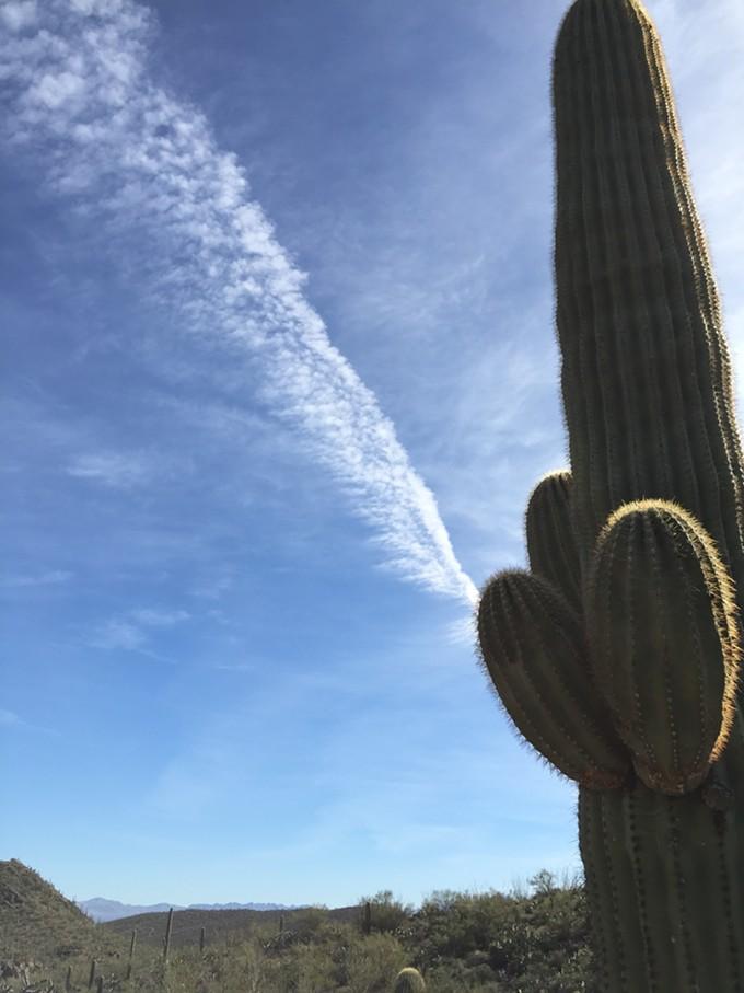 Leaking saguaro #2 - CARL HANNI