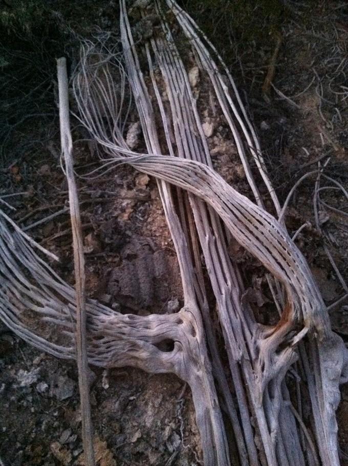 Sunset Skeleton - CARL HANNI
