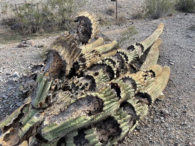 Fallen Giant - CARL HANNI
