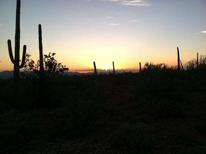 My final Daily Saguaro; I hope you've enjoyed! - CARL HANNI