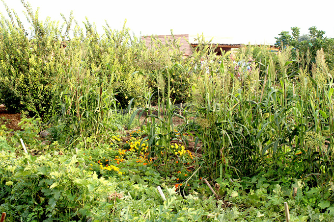 The lush heritage plant life at Tucson's Mission Garden hints at the city's gastronomic legacy. - HEATHER HOCH