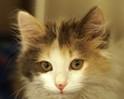 Seventh Annual Kitten Shower adoption event