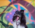 FREE Third Thursday: Yappy Hour