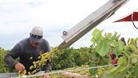 Wine Winners: Off the Vine Presses Back into Oro Valley