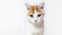 Adoptable Pet: Stitch Needs a Home