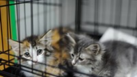 PACC Takes in Over 50 Animals in Hoarding Case
