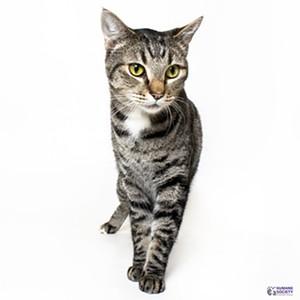 Adoptable Pet: Wilbur Needs a Home