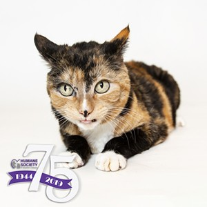HSSA has over 150 cats waiting for their forever families