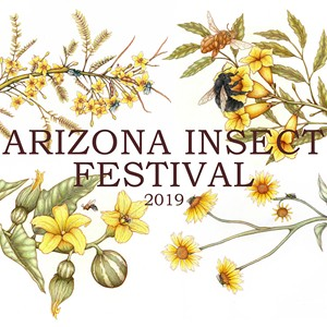 Things to Do This Weekend This Weekend in Tucson